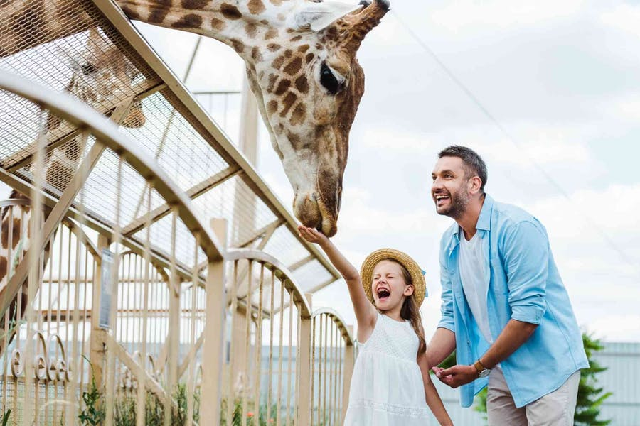 Do animals have a better quality of life in zoos than in the wild?