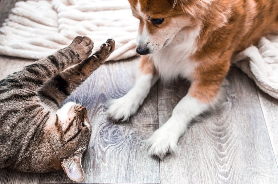 Are dogs better pets than cats?