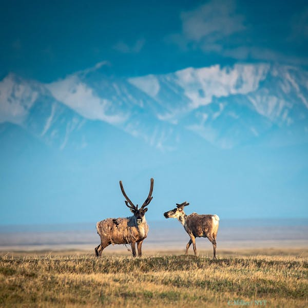 Should we drill in the Arctic National Wildlife Refuge?