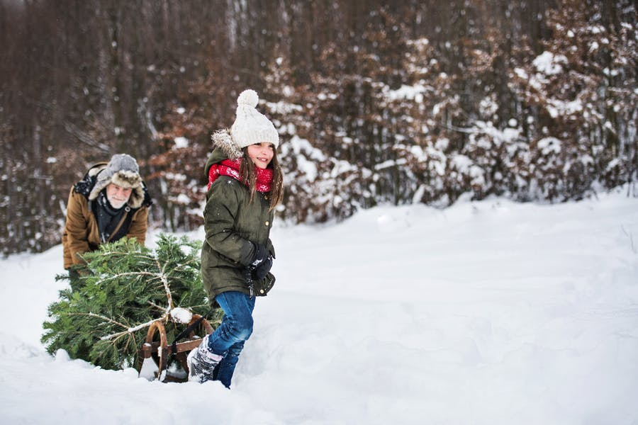 Is it better to have a real Christmas tree or an artificial one?