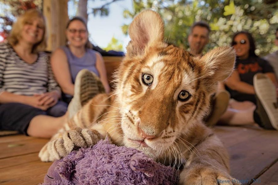Is it wrong to keep wild or exotic animals as pets?