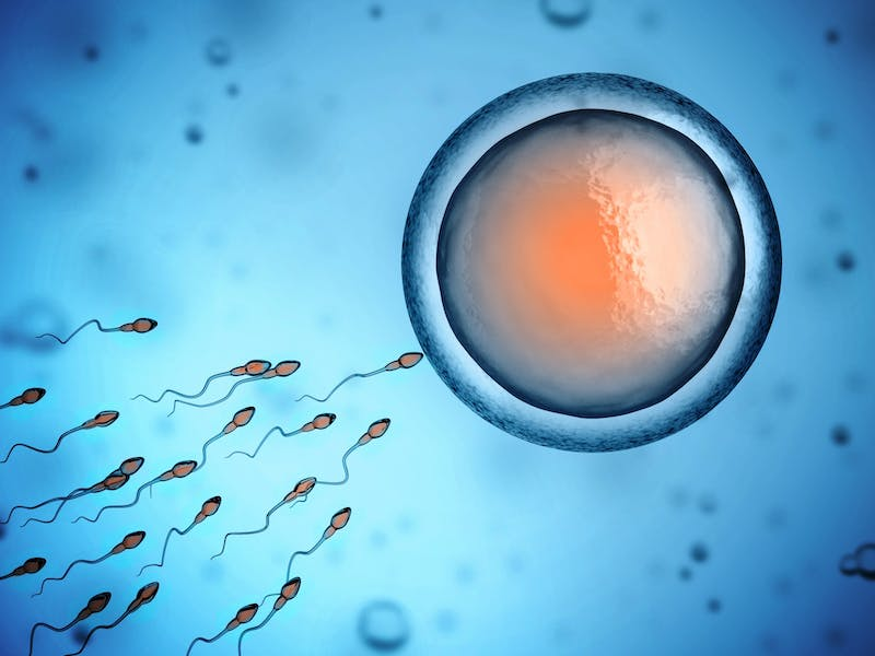 Does life begin at conception?