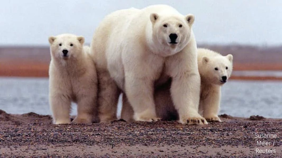 Is Biden admin right to suspend Alaskan oil and gas drilling leases?