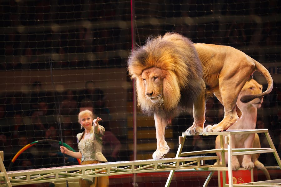 Are circuses unethical?